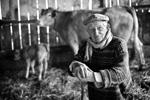 Georges, éleveur de veaux sous la mère © Marie Afdjene