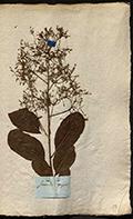 Herbier anonyme des Landes