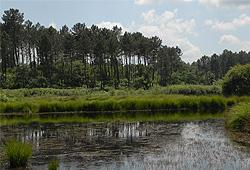 Le marais du Plata