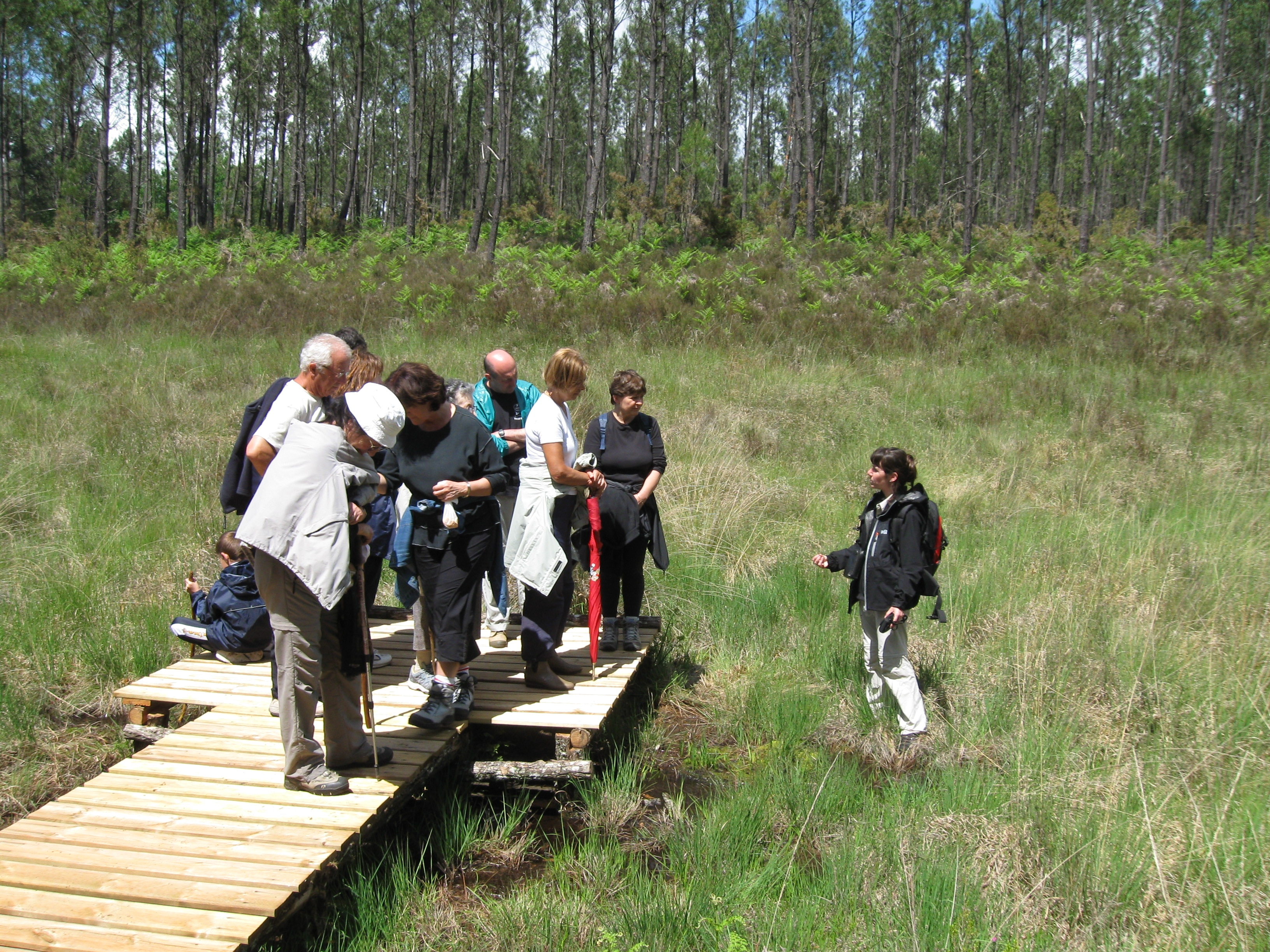 Préservation du patrimoine naturel landais
