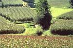 Territoire agricole landais