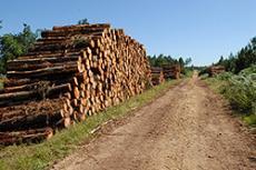 Les industries du bois