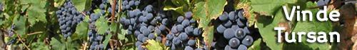 Gastronomie Landes - Vin de Tursan